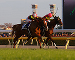 Gentildonna (Deep Impact x Donna Blini, Bertolini) wins a duel with Horse of the Year Orfevre in the final moments of the 32nd Japan Cup at Tokyo Racecourse on November 25th, 2012. .