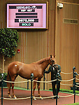 September 10, 2014: Hip #487 Malibu Moon - Blue Moon (FR) filly consigned by Taylor Made sales, sold for $675,000 at the Keeneland September Yearling Sale.   Candice Chavez/ESW/CSM