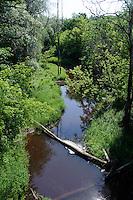 Nebenfluss der Gauja, Lettland, Europa