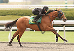 07 April 2011.  Hip #167 Corinthian - Known Romance filly, consigned by Wavertree Stables.