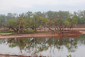 Willow Tree Peninsula