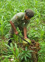 Timorese student Laca Ribeiro uses his machete to open a fresh coconut on Atauro Island, Timor-Leste (East Timor)