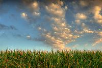 Cornfield and clouds in Arizona