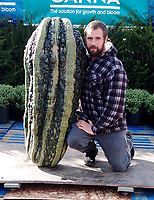 BNPS.co.uk (01202 558833)<br /> Pic: MarkBaggs/BNPS<br /> <br /> Mark with the massive marrow<br /> <br /> A farmer is celebrating after growing a record-breaking marrow, which tips the scales at more than 200lbs.<br /> <br /> Mark Baggs' marrow is the biggest ever grown in Britain and the second heaviest in the world.<br /> <br /> Weighing in at 200lbs 6ozs Mark's marrow is just six pounds short of the current world record that was grown in Holland in 2009.