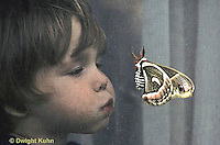 LE26-015z  Cecropia Moth - child blowing moth that has landed on screen - Hyalophora cecropia