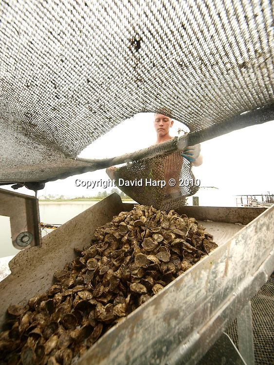 Johnny Shockley, left, and Ricky Fitzhugh with a cage of   oysters at their test site on Hoopers Island