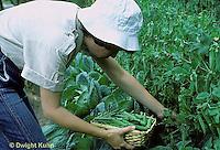 HS26-133z  Pea - picking peas - Green Arrow variety