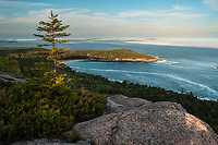 View of Great Head from Gorham Mt At sunset in Acadia National Park in  Maine