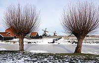 Nederland - Zaanstad - Zaanse Schans. Knotwilgen.  Foto ANP / HH / Berlinda van Dam