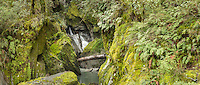 Scenic waterfall of Robinson Creek in native forest near Haast Pass, MT. Aspiring National Park, Central Otago, New Zealand