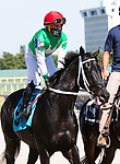 January 23, 2021:  #9  Ridin With Biden, with jockey Joel Rosario on board, in the post parade,  at Gulfstream Park in Hallandale Beach, Florida.  Liz Lamont/Eclipse Sportswire/CSM