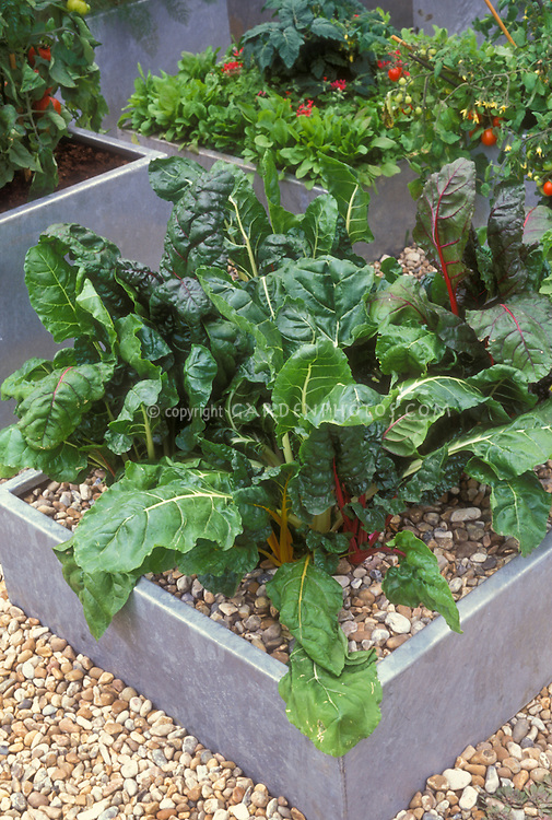 Container gardening in small space with vegetables including Swiss chard Bright Lights, tomatoes, spinach, etc.