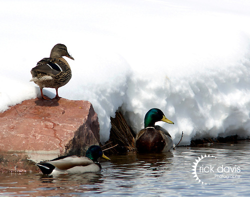 When a foot of heavy, wet snow blanketed Colorado on a recent spring day, it was the perfect time to capture the scene.