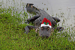Holiday Wild Animals, Alligator, Turtle, Fish, Crane, Bird