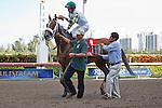 Jockey Ramon Dominguez helps to cool off Mucho Macho Man after they win the Gulfstream Park Handicap(G2) at Gulfstream Park, Hallandale Beach Florida. 03-10-2012