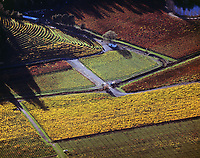 aerial photograph Napa Valley vineyards in the fall, Napa County, California