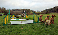 FAO JANET TOMLINSON, DAILY MAIL PICTURE DESK<br /> Pictured: A dog is jumping hurdles at the assault course Wednesday 23 November 2016<br /> Re: The Dog House in the village of Talog, Carmarthenshire, Wales, UK