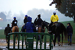 October 28, 2015:  Horses going back to the barns after morning works on a rainy Wednesday morning.  Candice Chavez/ESW/CSM