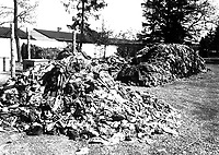 This pile of clothes belonged to prisoners of Dachau concentration camp, recently liberated by troops of the U.S. Seventh Army.  Slave laborers were compelled to strip before they were killed.  Germany, April 30, 1945.  T4c. Sidney Blau.  (Army)<br /> NARA FILE #:  111-SC-206193<br /> WAR & CONFLICT BOOK #:  1129