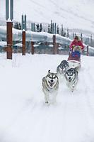 Dog mushing in the Brooks mountains near Wiseman, Alaska
