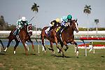 Holiday Broad with Jose Lezcano up  winning at Gulfstream Park, Hallandale Beach Florida.