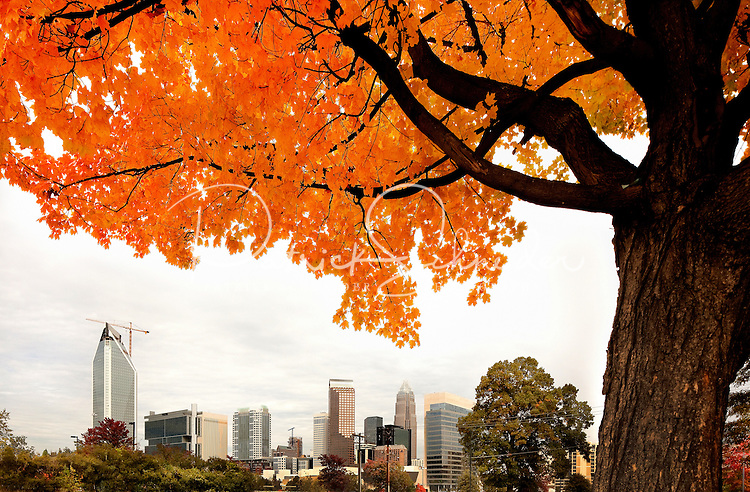 The brilliant hue of orange maple leaves in autumn frame the Charlotte, NC, skyline in the distance. A summer with frequent rains, followed by fall with hot afternoons and cool nights gave leaf peepers a pallet of colorful fall foliage to enjoy in 2009. Photo shows the still-under-construction Duke Energy Center, Charlotte's second-largest skyscraper, on the left side of the frame.