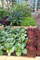 Suburban / urban backyard raised beds vegetable garden on brick patio, with upscale house and French doors visible, patio chair, rows of red lettuces, green lettuce, kale, pak choi, salad greens, flowers