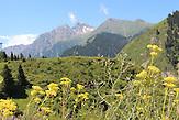 """Der Jesik Nationalpark befindet sich 70km östlich von Almaty. Auch hier versucht Gesellschaft """"Grüne Rettung"""" durch fotografische Dokukmenation auf die Veränderungen in der Landschaft aufmerksam zu machen."""