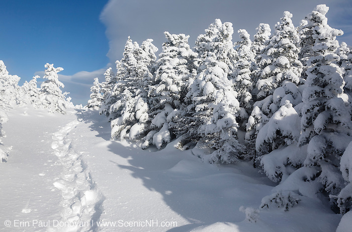 Appalachian Trail - Snowshoe tracks on the Carter-Moriah Trail in winter conditions near the summit of Carter Dome in the White Mountains, New Hampshire USA.