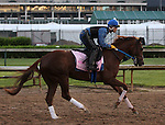LOUISVILLE, KY - APRIL 27: Taxable (Tapit x Jackpot Joanie, by Giant's Causeway) gallops in preparation for the Kentucky Oaks with exercise rider Abel Flores at Churchill Downs, Louisville KY. Owner Winchell Thoroughbreds LLC. (Photo by Mary M. Meek/Eclipse Sportswire/Getty Images)
