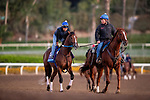 OCT 29: Breeders' Cup Juvenile  entrant Shoplifted, trained by Steven M. Asmussen, gallops at Santa Anita Park in Arcadia, California on Oct 29, 2019. Evers/Eclipse Sportswire/Breeders' Cup