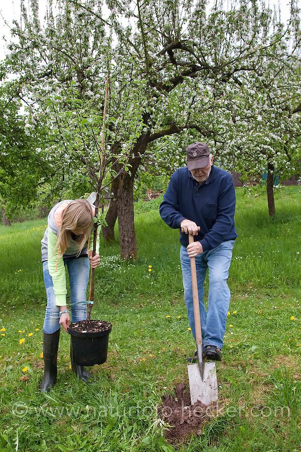 Apfelbaum pflanzen, Mädchen, Kind, Kinder pflanzen mit ihrem Großvater einen Obstbaum, Baum im Garten, Streuobstwiese, Kultur-Apfel, Apfel, Obstplantage, Obstanbau, Obst, während der Blüte, Apfelbaumblüte, Malus domestica, Apple, Pommier commun