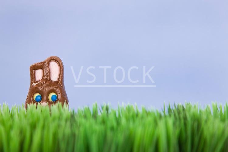 Studio shot of Easter chocolate bunny in grass