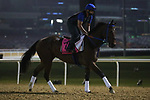 March 25, 2021: UAE Derby contender Lugamo trains on the track for trainer Antonio Sano at Meydan Racecourse, Dubai, UAE.<br />