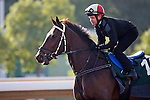 SHA TIN,HONG KONG-DECEMBER 09: Quechua,trained by Patrick Shaw,exercises in preparation for the Hong Kong Vase at Sha Tin Racecourse on December 9,2016 in Sha Tin,New Territories,Hong Kong (Photo by Kaz Ishida/Eclipse Sportswire/Getty Images)