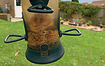 Doormouse stuck in birdfeeder. Images courtesy of the Hampshire Dormouse Group