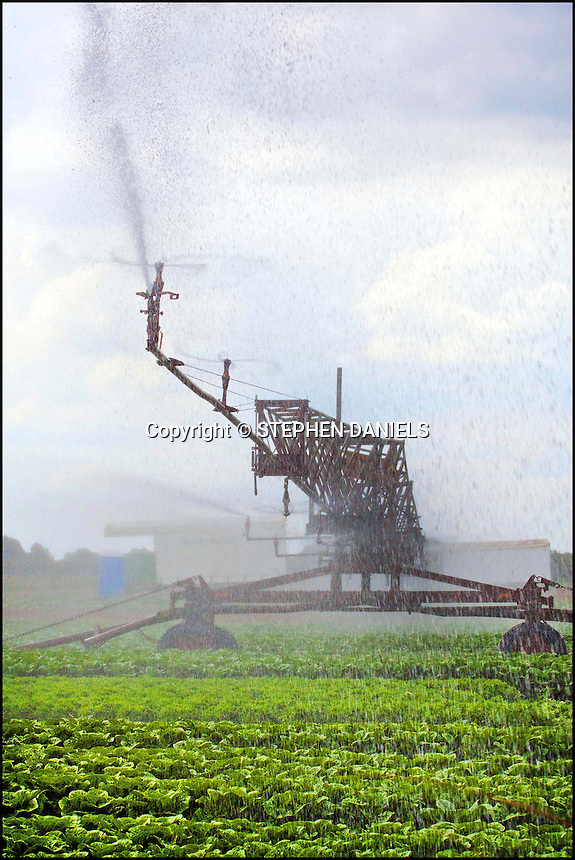 Photo by ©Stephen Daniels <br /> Irrigating lettuce crops in the field