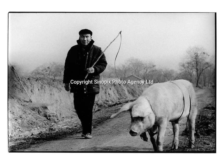 A villager walks his prized pig to market at a village in Huaji County, Guangdong, China. Most of China's 800 million farmers live a very basic existence. The poverty gap in China is a major theme at this years National People's Congress in Beijing since it is causing destabilisation of the country....PHOTO BY SINOPIX