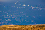 Flocks of Snow Geese forming into flocks as they head north on their spring migration route along the east front of the Rocky Mountains in Montana