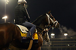 October 30, 2018 : Axelrod at Churchill Downs on October 30, 2018  in Louisville, Kentucky in preparation for the Breeders' Cup Classic. Mary M. Meek/ESW/CSM