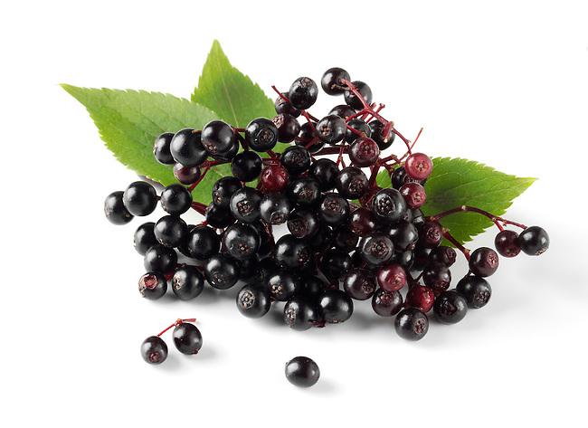 Bunch of Wild Elderberries