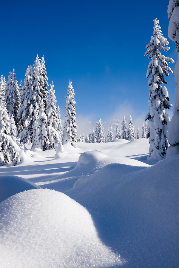 Snow blanketed subalpine forest, central Cascade Mountains, Washington State, USA