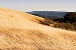 Grassland, Russian Ridge Open Space Preserve, Bay Area, California