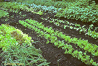 HS18-082e  Vegetable gardens - lettuce, carrots, onions, beans, broccoli