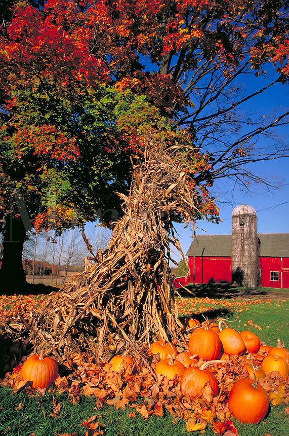 Pumpkins & corn stalks decorate farm in autumn, farms, farming, fall foliage, harvest. Cassopolis Michigan USA nearby.