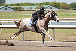 #113Fasig-Tipton Florida Sale,Under Tack Show. Palm Meadows Florida 03-23-2012 Arron Haggart/Eclipse Sportswire.