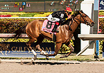 HALLANDALE BEACH, FL - March 3: Fly So High, #8, with Jose Ortiz aboard, wins the Grade II Davona Dale Stakes at Gulfstream on March 3, 2018 in Hallandale Beach, FL. (Photo by Carson Dennis/Eclipse Sportswire/Getty Images.)