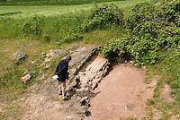Geologische Verwerfung Gneis-Sandstein im Museum NaturBornholm auf der Insel Bornholm, Dänemark, Europa<br /> Geological fault Gneiss-Sandstone at Museum NaturBornholm, Isle of Bornholm Denmark