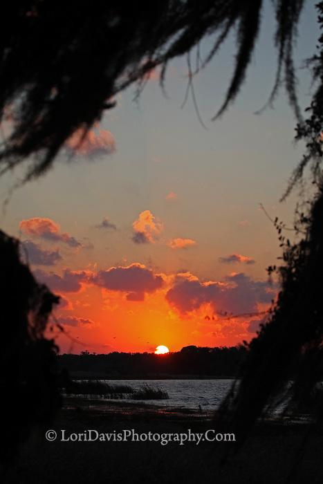 Sunset Framed Through Trees  #FL23