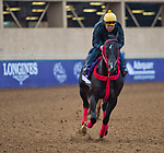 DEL MAR, CA - NOVEMBER 01: Sharp Azteca, owned by Gelfenstein Farm and trained by Jorge Navarro, exercises in preparation for the Breeders' Cup Las Vegas Dirt Mile at Del Mar Thoroughbred Club on November 1, 2017 in Del Mar, California. (Photo by Jesse Caris/Eclipse Sportswire/Breeders Cup)